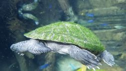 Zoo - Turtle Tail