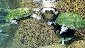 Zoo - Turtles