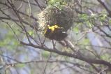 Zoo - Weaver Bird