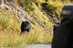BlackBears 1
