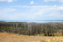 Yellowstone Lake - Pines after Forest Fire
