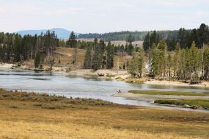 Yellowstone Landscape 1