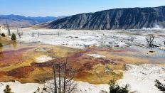 Yellowstone - Mammoth Hot Springs - 1