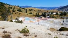 Yellowstone - Mammoth Hot Springs - 13