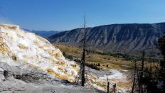 Yellowstone - Mammoth Hot Springs - 5 - Travertine Terrace 2