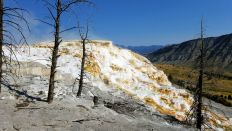 Yellowstone - Mammoth Hot Springs - 6 - Travertine Terrace 3