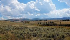 Yellowstone - Northwest Quad 2