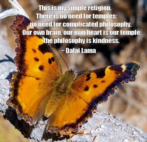 Butterfly with Dalai Lama Quote + C1