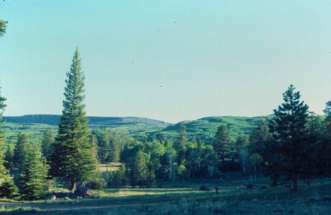 Dixie National Forest - 1+SPF