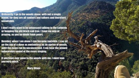 R Canyon + Mary Oliver Quote