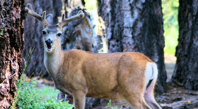 Moving On – The Medicine of the Deer